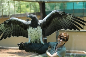 Águila Marcial