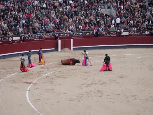 Sacrificio final del toro usando un cuchillo