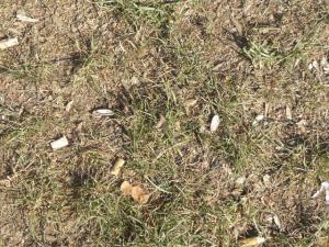 Colillas y cáscaras de pipas en un parque madrileño