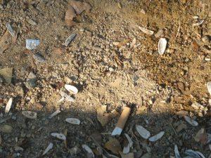 Cáscaras de pipas y colillas en el suelo