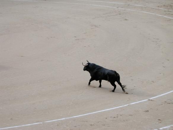 Toro saliendo a la plaza