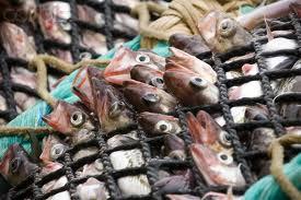 Red pesquera