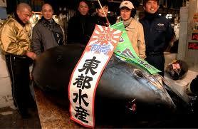 Subasta de atún rojo en Japón