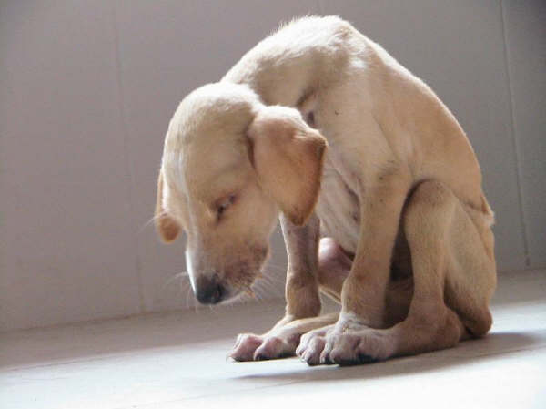 Este cachorro fue abandonado en un baño junto a una desgarradora carta que explica los motivos