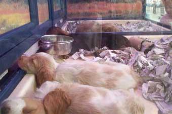 Perros en escaparate