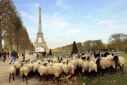 Manifestación de ganaderos de 2008