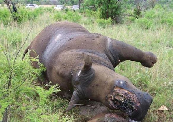 Caza furtiva de rinocerontes