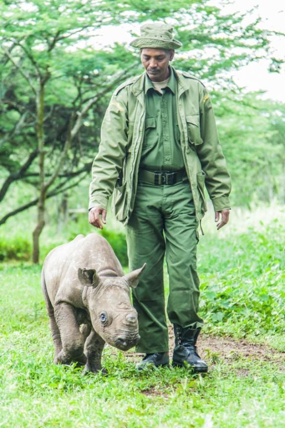 Bebé rinoceronte con su cuidador