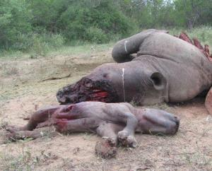 madre y bebé rinoceronte