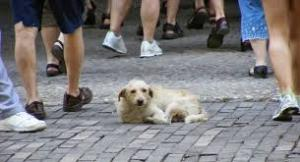 Abandono de mascotas