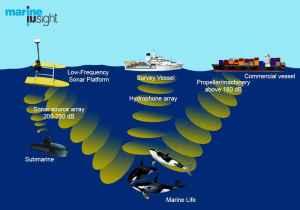 Contaminación acústica en el mar